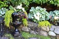 Elegant begonia planter urn filled with white begonias also available in vertical Stock Image