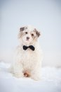 Elegant cute dog wearing tie looking camera portrait Stock Photos