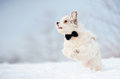 Elegant cute dog wearing tie running winter Stock Photos
