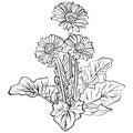 Elegant decorative gerbera flowers