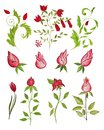 Elegant floral design artwork ink and watercolors on paper Stock Image