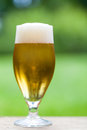 Elegant glass of cold refreshing beer Royalty Free Stock Photo