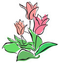 Elegant hand drawn pink tulips your spring design Stock Image
