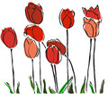 Elegant hand drawn red tulips your spring design Royalty Free Stock Photo