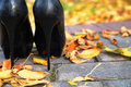 Elegant high heels in autumn leaves Royalty Free Stock Photo