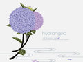 Elegant hydrangea on the water is first discovered in japan symbolizes heartfelt emotions Stock Photography