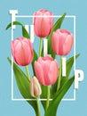 Elegant Tulip poster