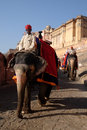 Elephant amber fort a mahout riding an down a road in front of in jaipur rajasthan india january Royalty Free Stock Photo
