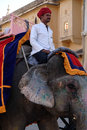 Elephant amber fort a mahout riding an down a road in front of in jaipur rajasthan india january Royalty Free Stock Photos