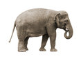 Elephant asian female isolated on white background Royalty Free Stock Image