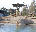 Elephant aviary in san diego zoo beautifully designed with pond and rocks Royalty Free Stock Photo