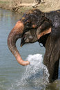 Elephant bathing Royalty Free Stock Images
