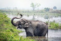 Elephant bathing in Nepal Royalty Free Stock Photo