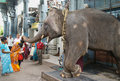 Elephant blessing woman temple with his trunk touch a hindu pondicherry tamilnadu india Stock Photos