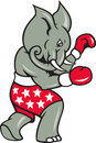 Elephant Boxer Boxing Stance Royalty Free Stock Photos