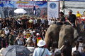 Elephant breakfast the is considered the biggest in the world and it holds guinness world record picture taken on nov Royalty Free Stock Images
