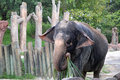 Elephant at Busch Gardens in Tampa Florida Royalty Free Stock Photo