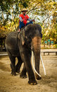 Elephant chiang mai thailand feb daily show at the thai conservation center mahout shows work with february in Royalty Free Stock Image