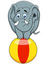 Elephant circus Royalty Free Stock Image
