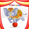 Elephant in circus vector illustration of playing with ball Stock Images