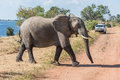 Elephant crossing dirt track before jeep