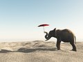 Elephant in the desert with umbrella a big holding an its trunk trying to protect itself from sun Stock Photo