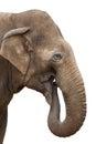 Elephant eating isolated Royalty Free Stock Photo