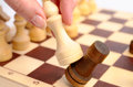 Elephant eats rook white beats black on chessboard defeated chess holding woman s hand selective focus close up view Stock Photos