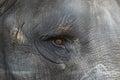 Elephant Eye Close up Royalty Free Stock Photo