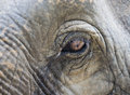 Elephant eye closeup nature in thailand Royalty Free Stock Images