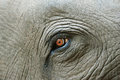 Elephant eye detail Royalty Free Stock Photography