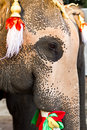 Elephant face close up Stock Images