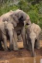 Elephant Family Royalty Free Stock Photos
