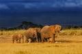Elephant family just before the rain Royalty Free Stock Photo