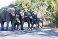Elephant family in the kruger np south africa Royalty Free Stock Photos