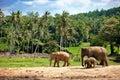 Elephant family walking towards a water hole Royalty Free Stock Photo