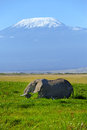 Elephant female with mount kilimanjaro in the background Royalty Free Stock Photography