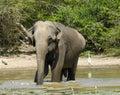 Elephant having bath Stock Images