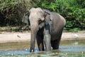 Elephant having bath Royalty Free Stock Photo