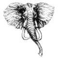 Elephant head Royalty Free Stock Photo