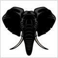 Elephant head. Isolated on white. Royalty Free Stock Photo