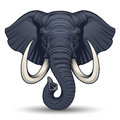 Elephant head in vector on white background Royalty Free Stock Photos