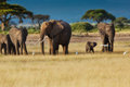 Elephant herd in Amboseli Royalty Free Stock Photo