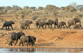 Elephant herd walking past a water hole Stock Photography