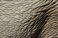 Elephant Hide Stock Photo