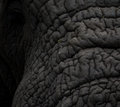 Elephant Hide Royalty Free Stock Photo