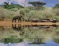 Slon a hrochy
