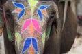 Elephant Holi festival in Jaipur, India Royalty Free Stock Photo