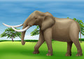 Elephant illustration of the big Stock Images