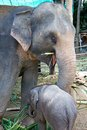 An elephant with its little child Royalty Free Stock Photo